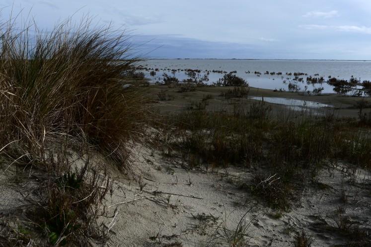 Les dunes rondes et blondes