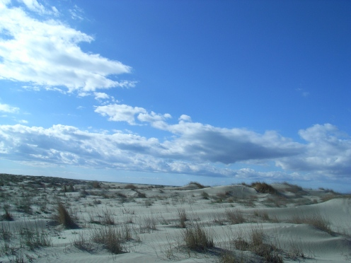 Camargue en dunes
